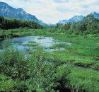 BC Wetlands Atlas