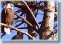 Wildlife Tree Stewardship