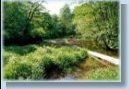 Sensitive Ecosystems Inventory (SEI)